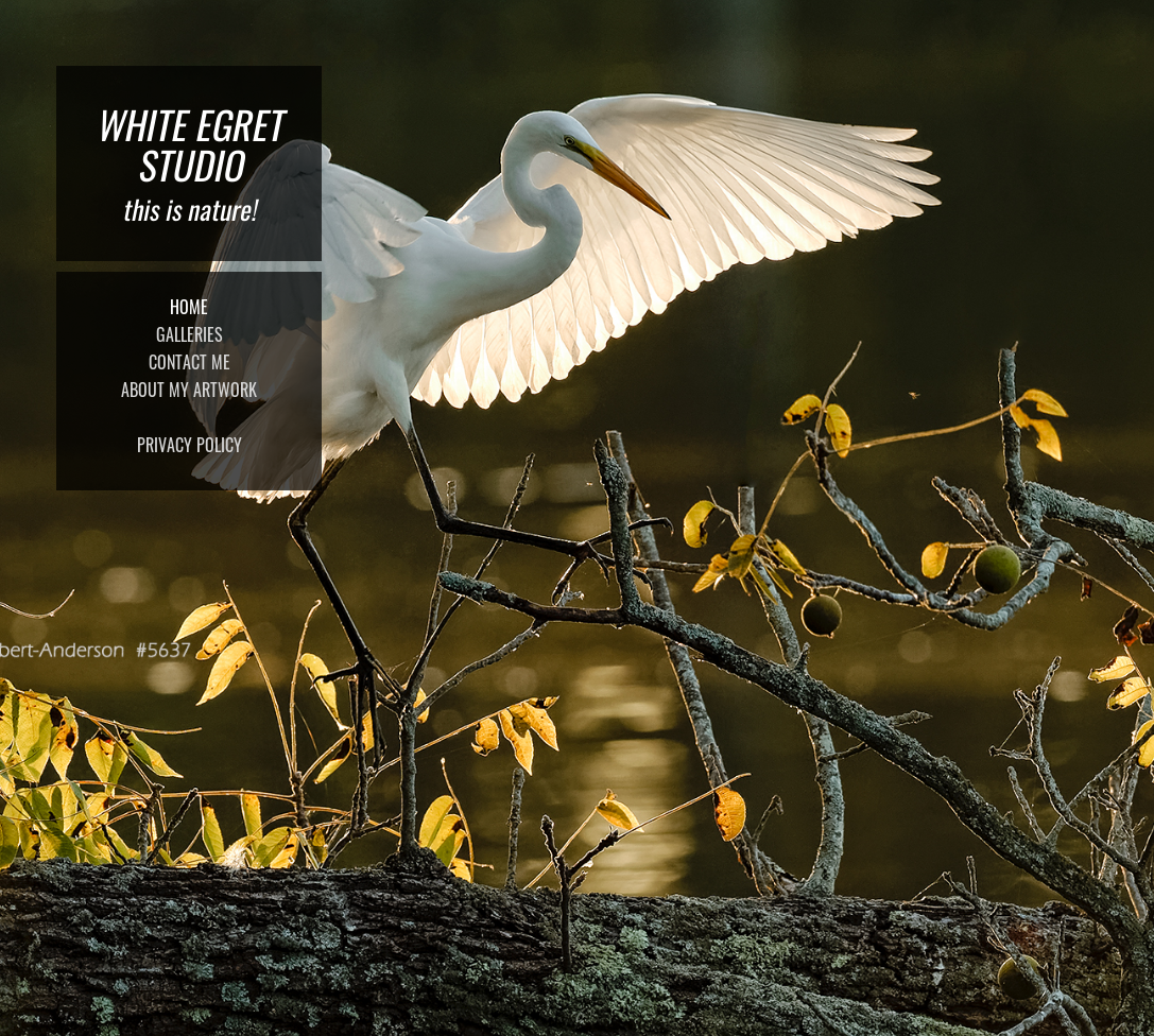 White Egret Studio